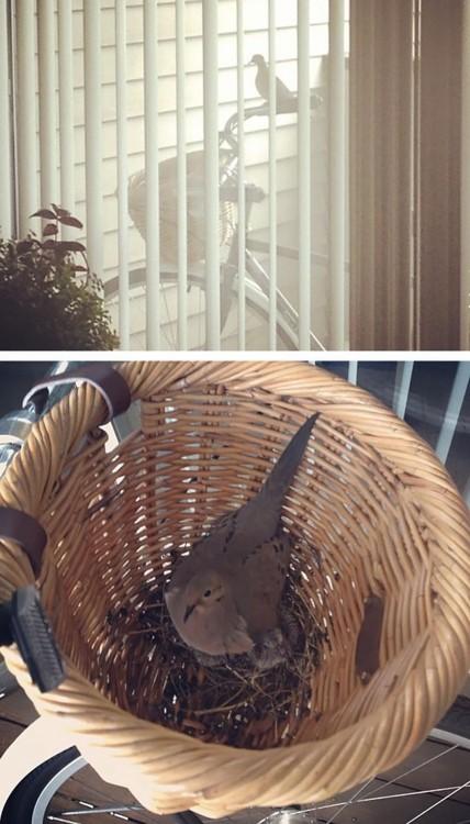 nido de ave dentro de la canasta de una bicicleta