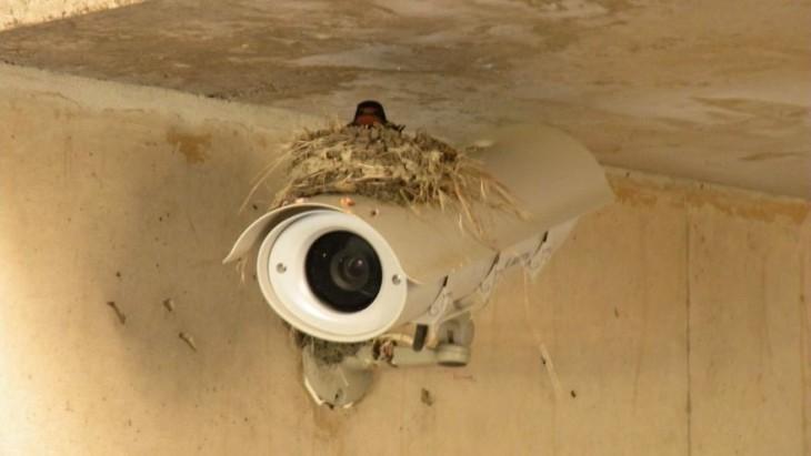 nido de ave sobre una cámara de seguridad en el techo