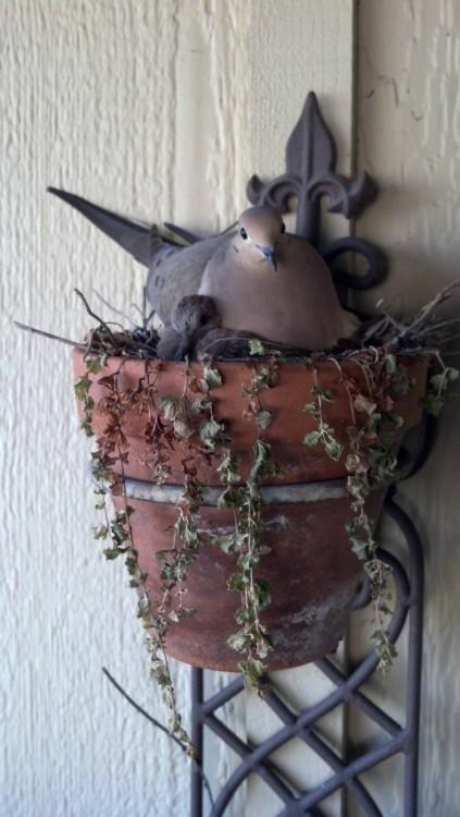 nido de pájaro sobre una planta colgada en la pared de una casa