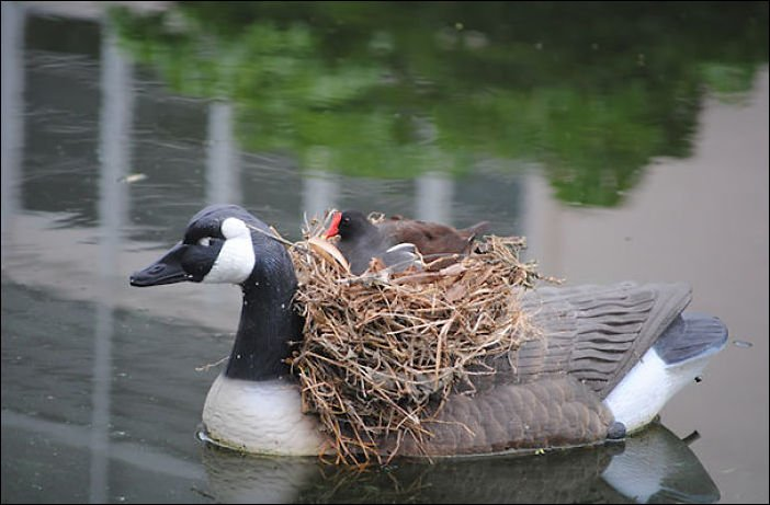 nido de pájaro sobre un adorno en forma de pato