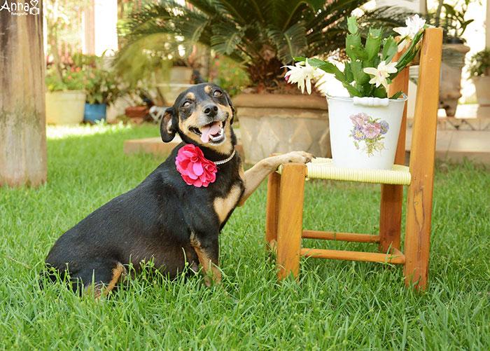 lilica posando junto a la silla