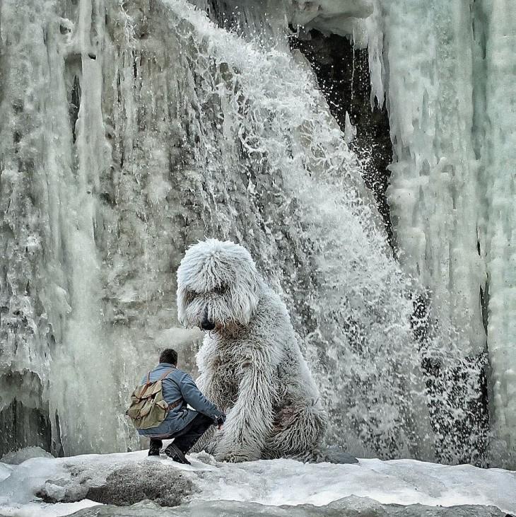 juji en la nieve