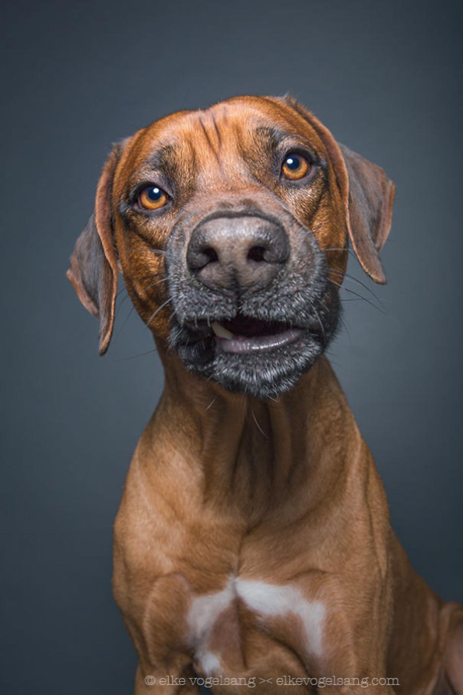10 Fotograf 237 As De Perros Con Expresiones De Confusi 243 N