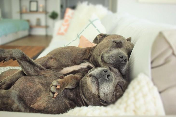 dormidos en la misma cama