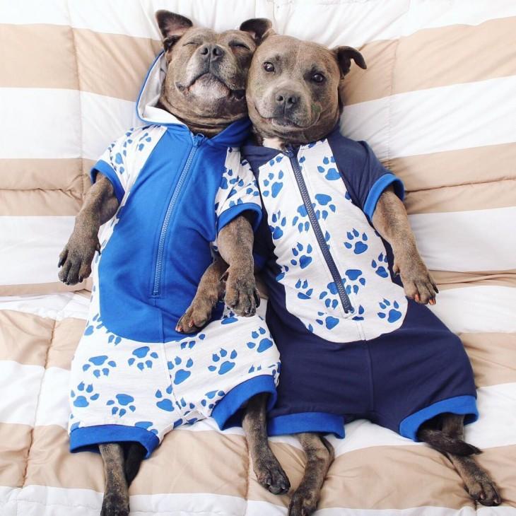 Perros amigos vestidos de azul