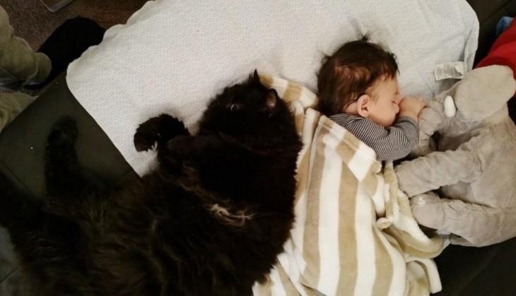 bebé acostado de espaldas con otro gatito en una cama