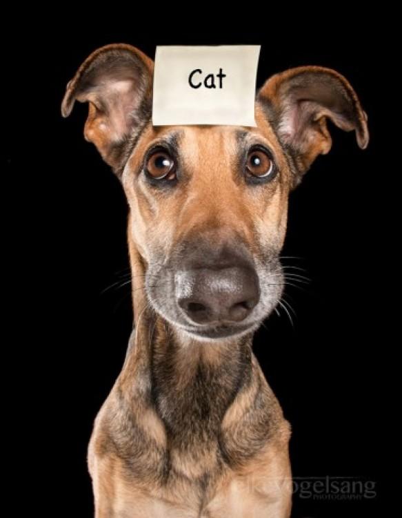 Retrato de un perro con un letrero con la palabra gato sobre su cabeza