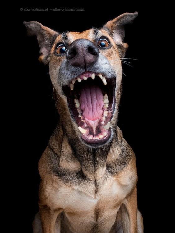 retrato de un perro a punto de lanzar una mordida