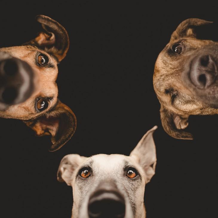 Retrato de las 3 cabezas de perros