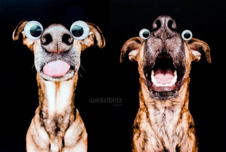 Fotografía de dos cachorros con ojos postizos