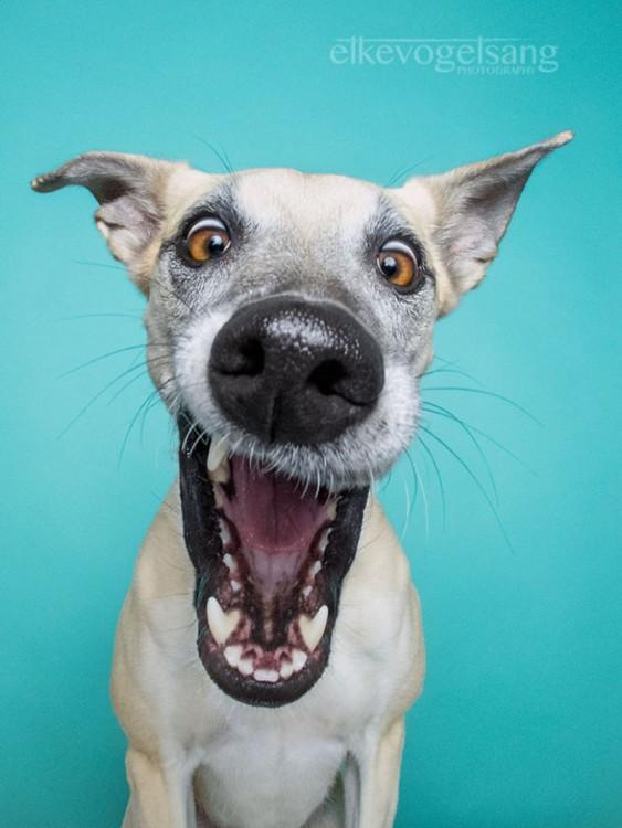 fotografía de un cachorro sobre un fondo azul