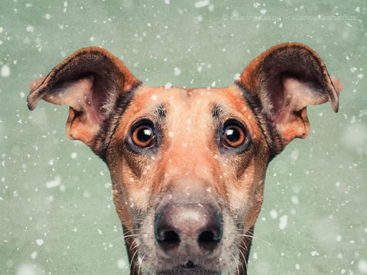 retrato de la cabeza de un cachorro