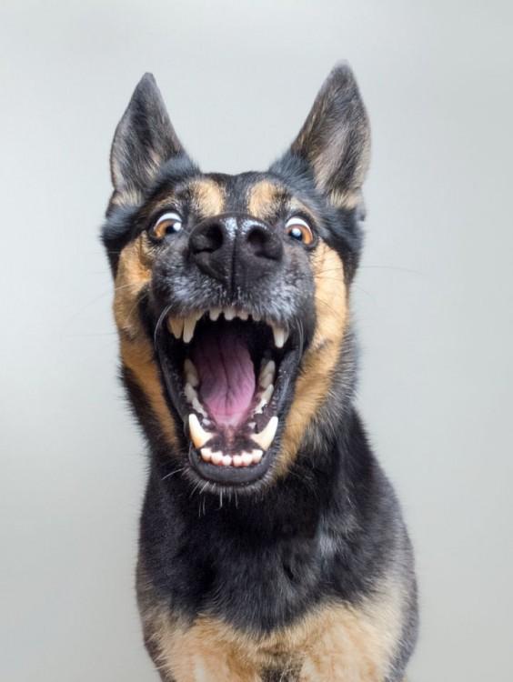 Fotografía de la expresión de un perro abriendo el hocico