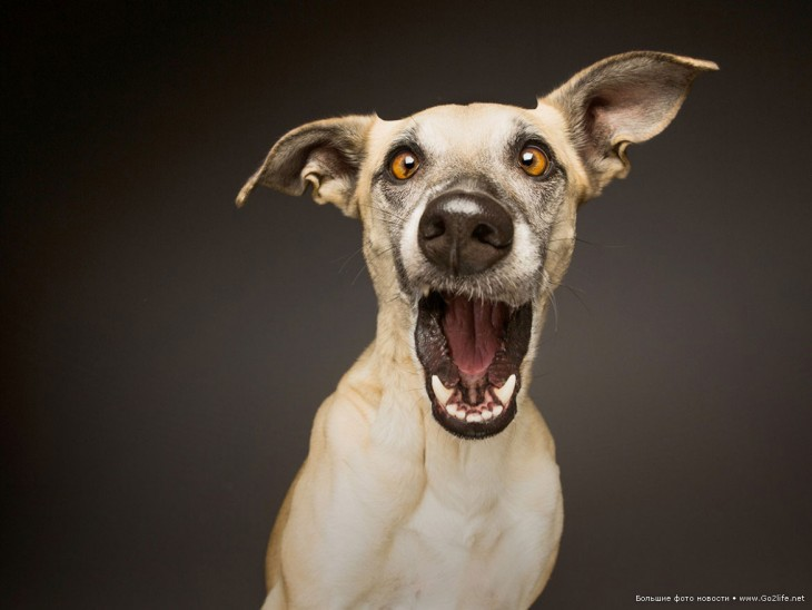 foto de la expresión de un perro que parece gritar de sorpresa