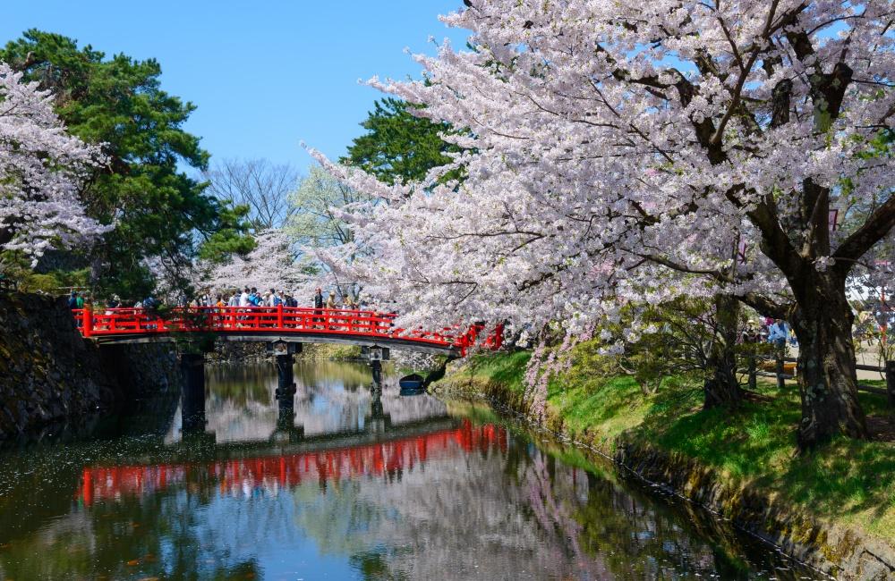 Festival Hanami en Japón celebración del florecimiento Sakura
