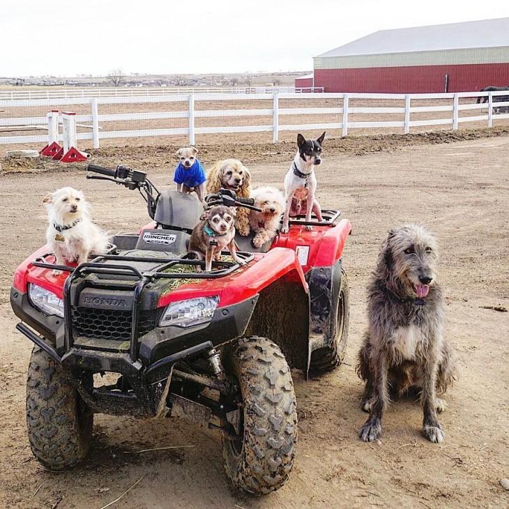 perros sobre una cuatrimoto en una granja granja