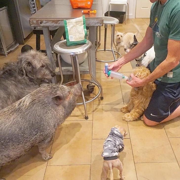 veterinario atendiendo a varios animales a su alrededor