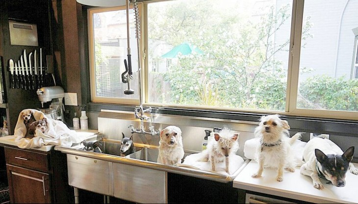 perros sobre unas tinas