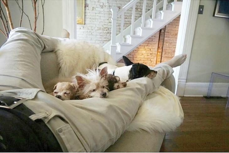 perros acostados entre las piernas de un hombre