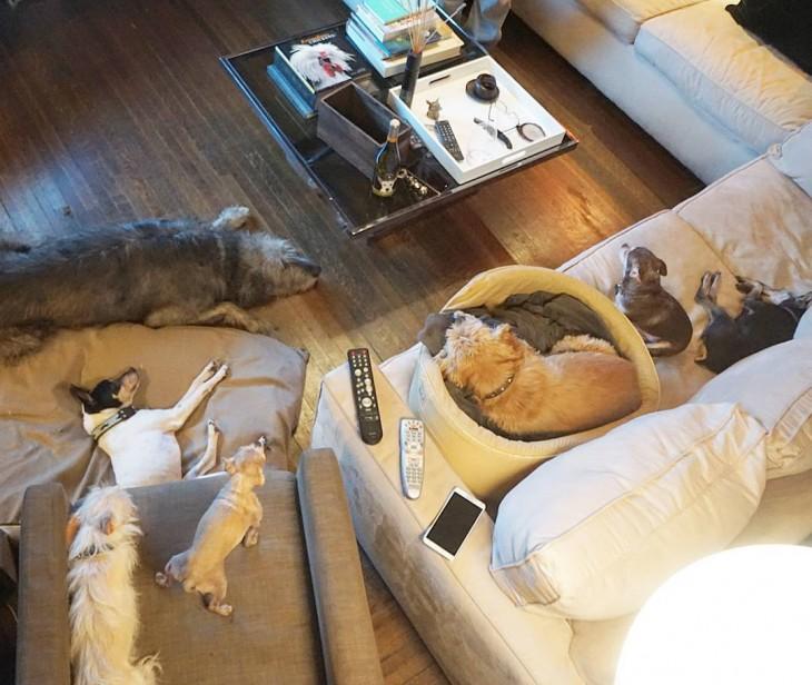 perros acostados en sillones en la sala de una casa