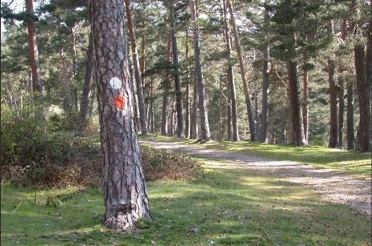 árboles de un bosque marcados