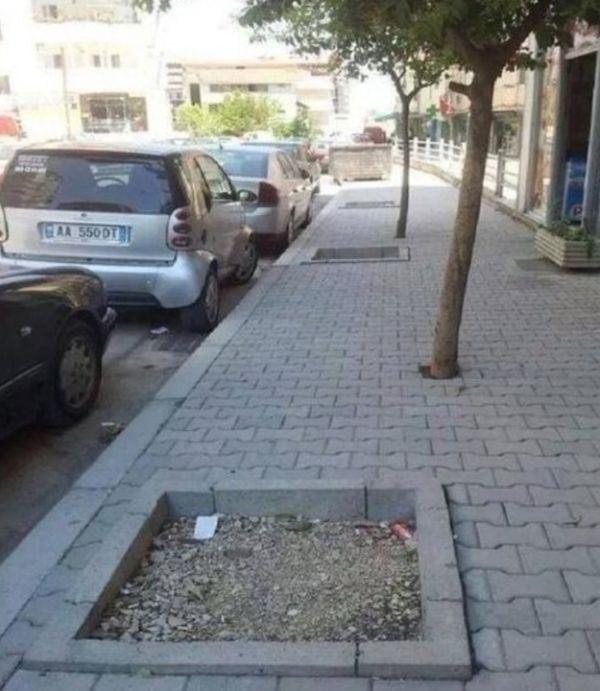Árboles en cemento, no en las macetas