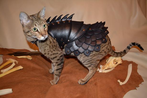 armadura para proteger a los gatos