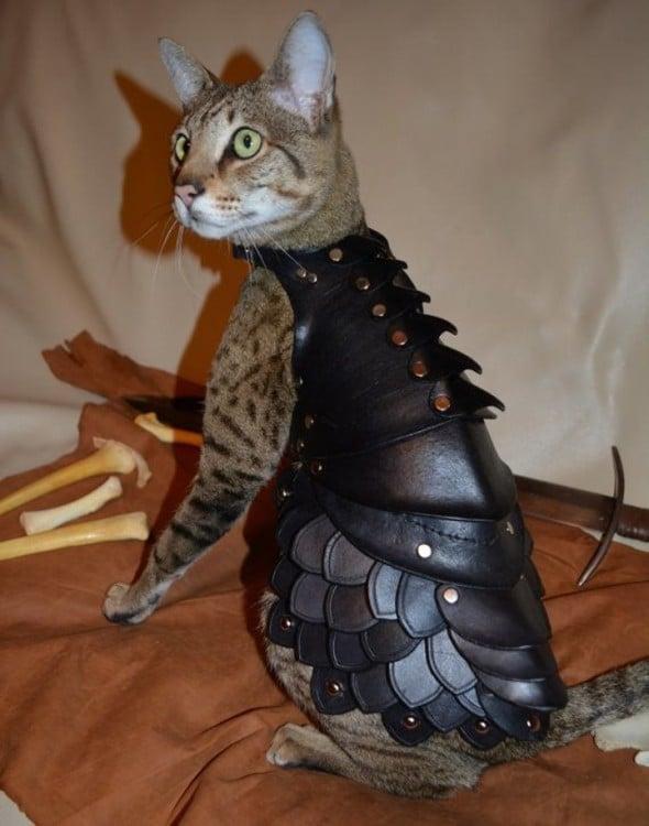 gata modela armadura especial hecha con cuero