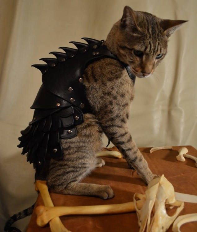 gato modela armadura de cuero resistente