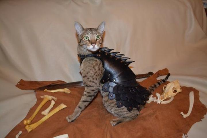 La gata Jenga modela una armadura de cuero