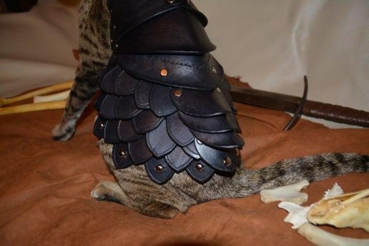armadura para gatos permite a mobilidade