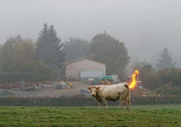La vaca atómica