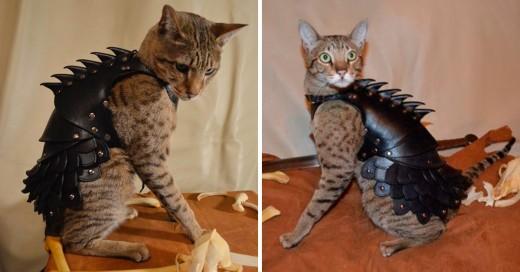 armadura para gatos
