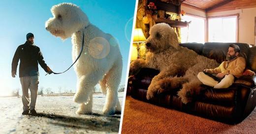 Juji ¡el perro más grande de Instagram!
