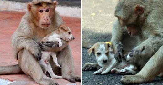 La historia del mono Rhesus y el lindo cachorro
