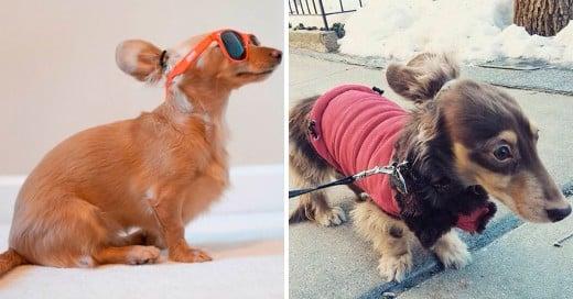 la nueva tendencia en peinados para perros