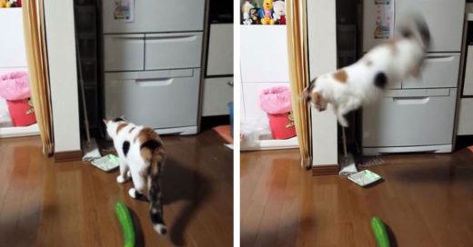 ¿Porqué los gatos le temen tanto a los pepinos?