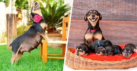 Lilica, la perrita que posó feliz en su embarazo, ¡ya tuvo a sus cachorros!