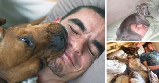 Situaciones que pasan por dormir con tu perro