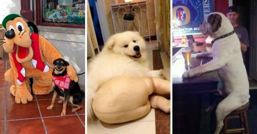 Fotografías de perros sorprendidos justo en el momento
