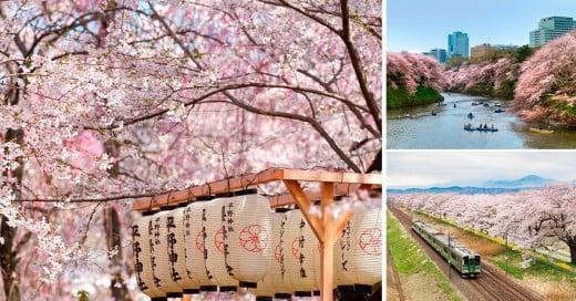 la primavera y Japón se viste de sakura con estos hermosos paisajes