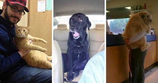 Mascotas que fueron engañadas cruelmente para llevarlas al veterinario