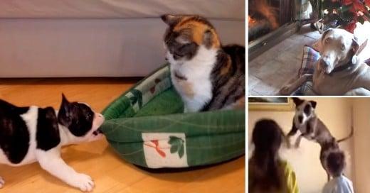 Videos divertidos de perros que prefieren otro lugar para su cama jeje