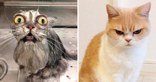 10 cosas que odia tu gato