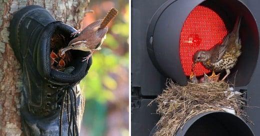 Lugares menos usuales donde los pájaros pusieron sus nidos