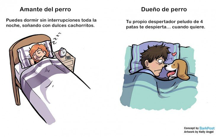 diferencia entre amantes de perro y dueños de perro cuando duermes