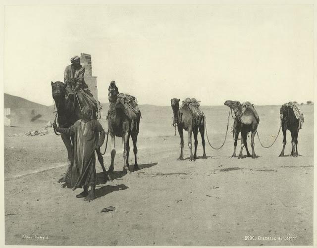 grupo de camellos por el desierto
