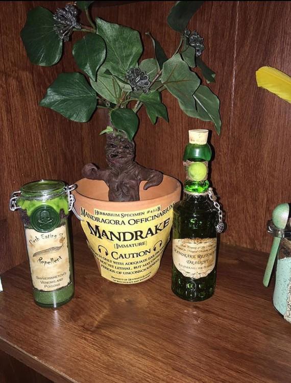 cuarto decorado harry potter, planta de mandragora