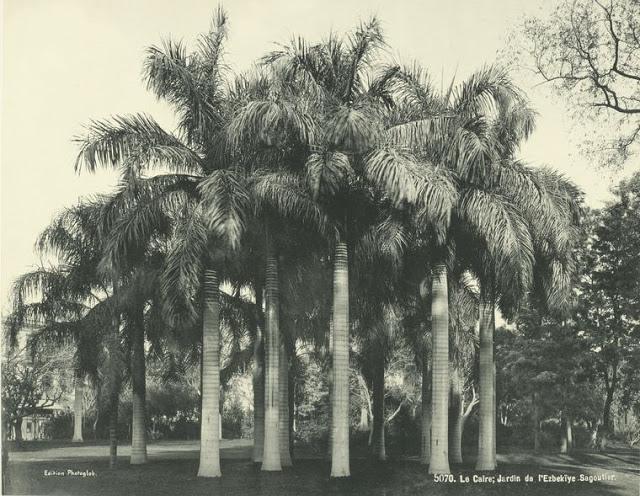 jardin de ezbekieh