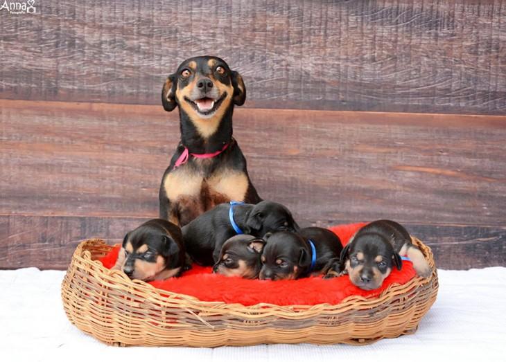 lilica posa sonriendo con sus 5 cachorros